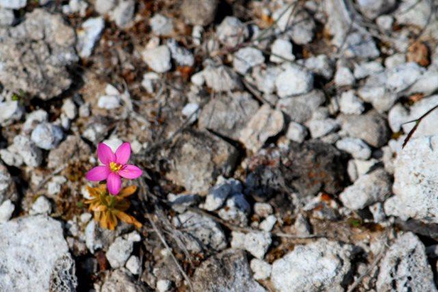 flower-pic