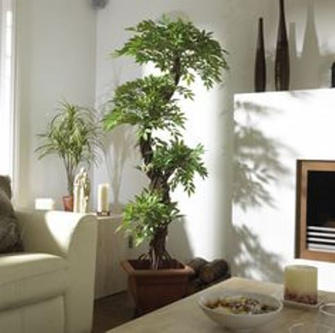 house-plants-pic